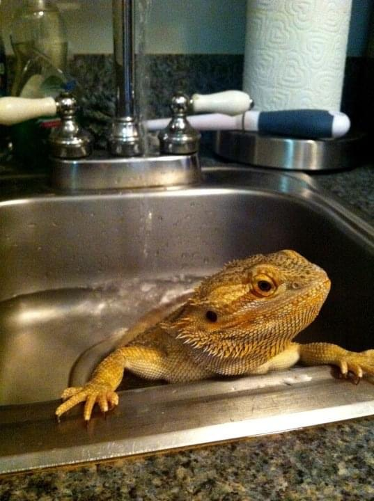 Wash the Dragon